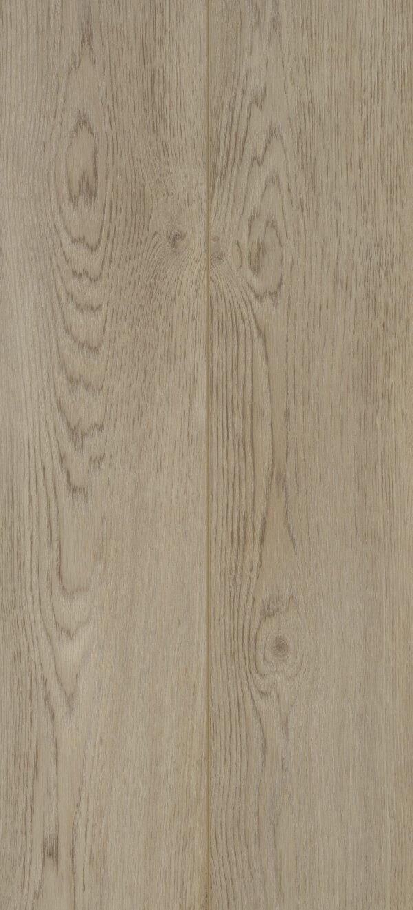Baltimore Oak